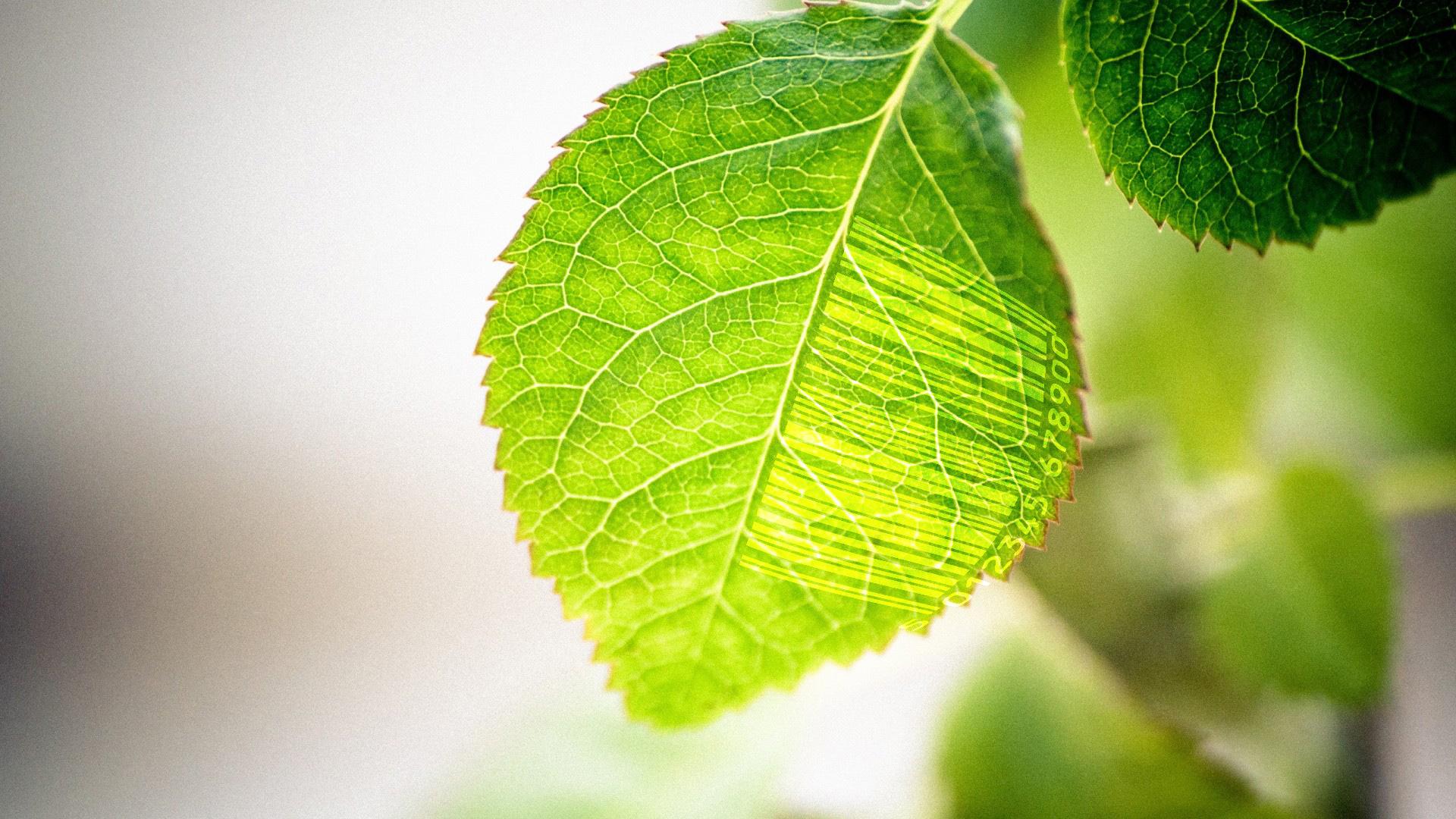 leaf-46_barcode